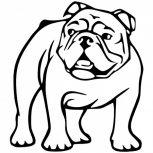 Bulldog matrica
