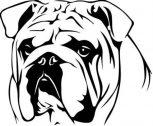 Angol bulldog matrica