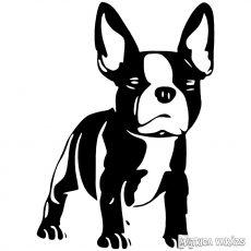 Francia bulldog matrica 5