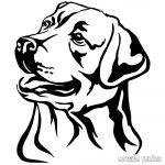 Labrador matrica 5