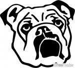Angol bulldog matrica 2