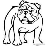 Angol bulldog matrica 10