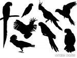 Papagájok matrica