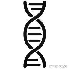 DNS Autómatrica